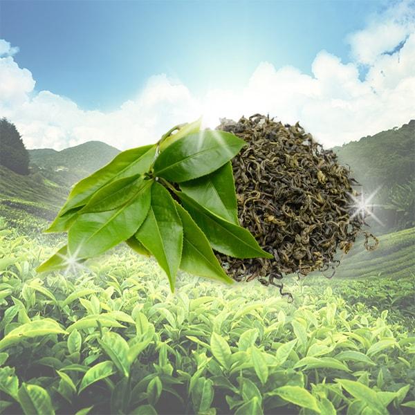 Power of Green Tea Leaves