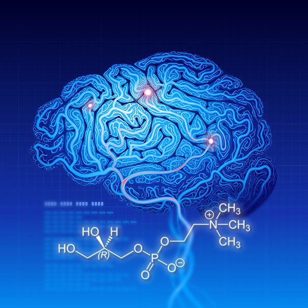 Alpha-GPC Working In Brain
