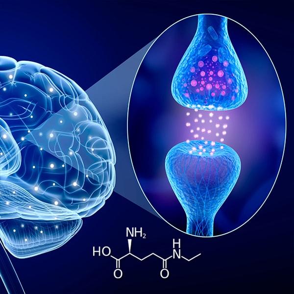 L-Theanine Working In Brain
